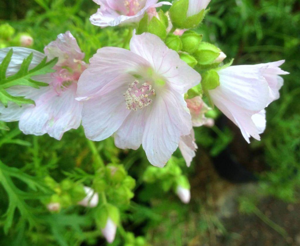4 piante ornamentali da giardino con fiori bellissimi - Piante da giardino con fiori ...