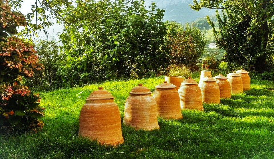 coltivazione rabarbaro campane forzatura Res Naturae Lecco