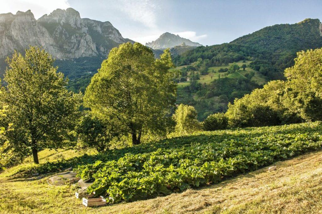 Res Naturae campo rabarbaro italiano 4