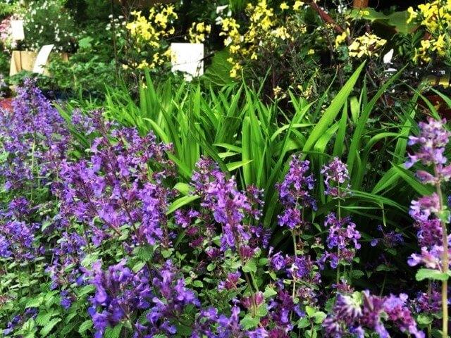 4 piante ornamentali da giardino con fiori bellissimi - Piante ornamentali da giardino ...