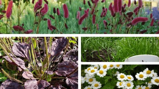5 erbe selvatiche commestibili da riconoscere e usare