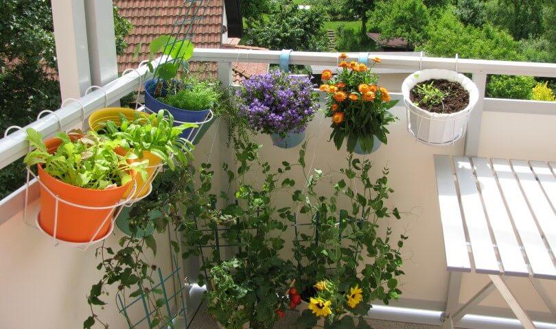 Come creare un mini orto sul balcone, con le piante nane