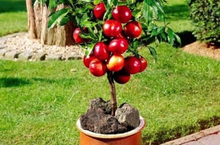 Come creare un mini orto sul balcone con le piante nane for Piante da frutto vaso