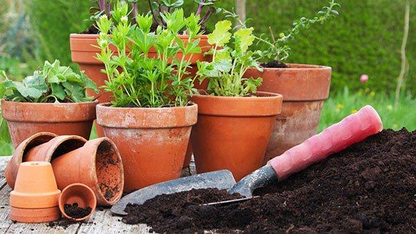 Come rinvasare una pianta piccola o appena nata