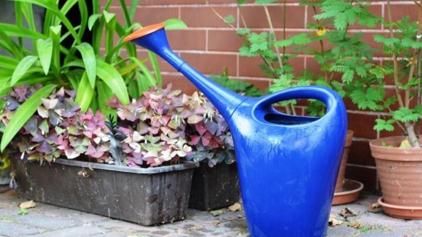 Come innaffiare le piante? E quando?
