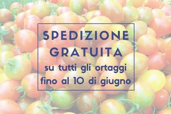 ATTENZIONE, OFFERTA AL MOMENTO NON DISPONIBILE: Offerta speciale sulle nostre inusuali piante di Pomodori, Melanzane e Peperoni