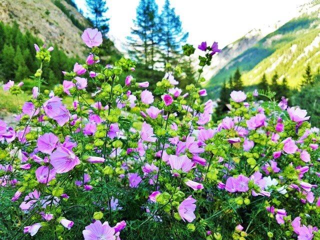 Insalata di fiori commestibili, 6 idee da portare in tavola