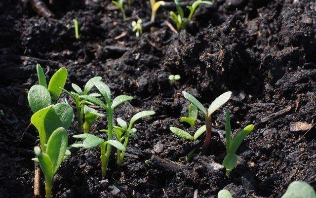 Tipi e composizione del giusto terriccio per piante