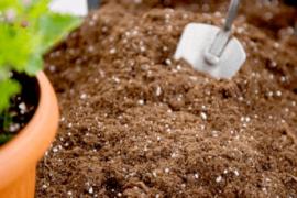 15 piante da coltivare entro maggio!